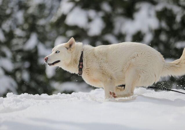 Ergun, bağlı bulunduğu Akseki ilçesinden, Manavgat ilçesine daha yakın olan Taşlıca Mahallesi'ne kar yağmadığı için köpeğini ilk defa kar görsün diye yaklaşık 80 kilometre uzaklıktaki 1825 rakımlı Alacabel mevkisine getirdi.