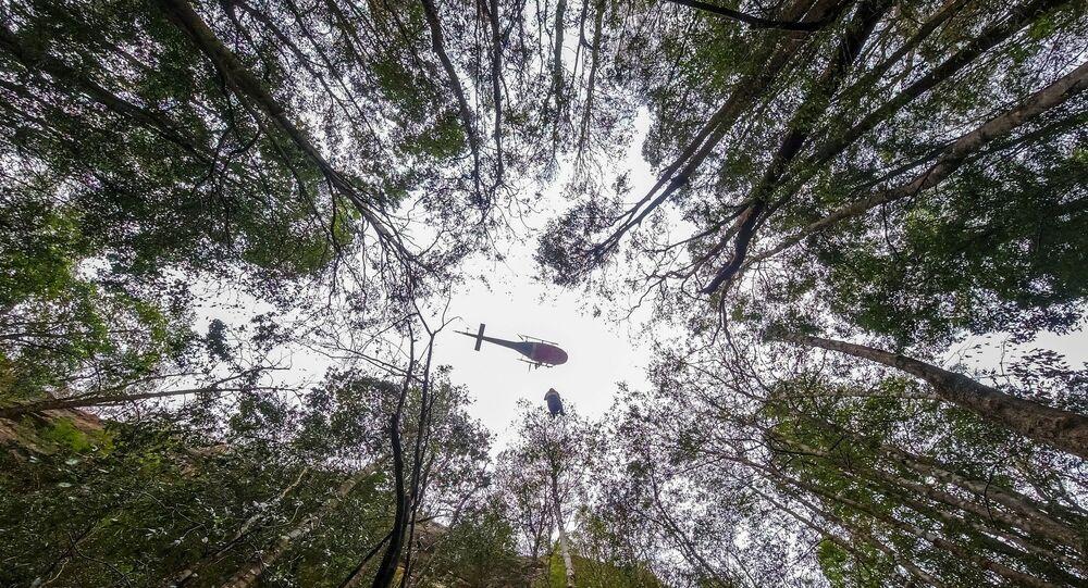 'Dinozor ağaçları' olarak da bilinen dünyanın en yaşlı ağaçlarından Wollemi çamları