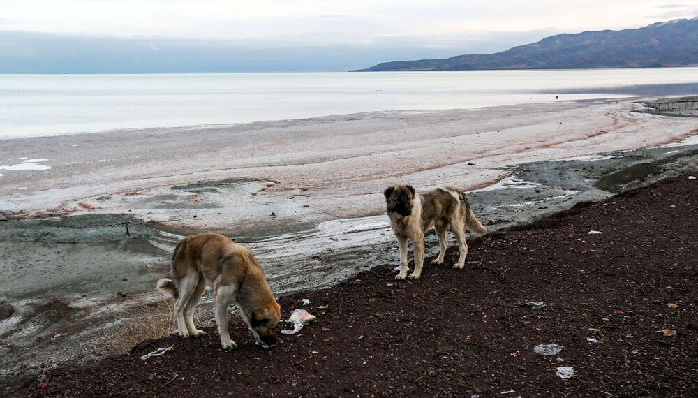 Orta Doğu ve İran'ın en büyük gölü Urmiye, kuraklık yüzünden yok olma tehlikesiyle karşı karşıya.