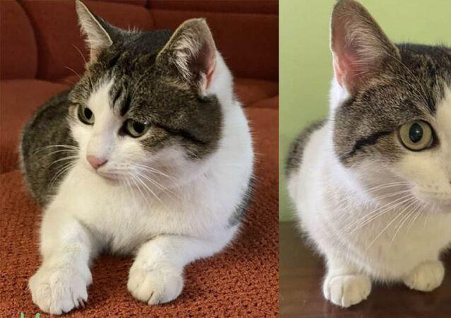 Satışa sunulan kedi