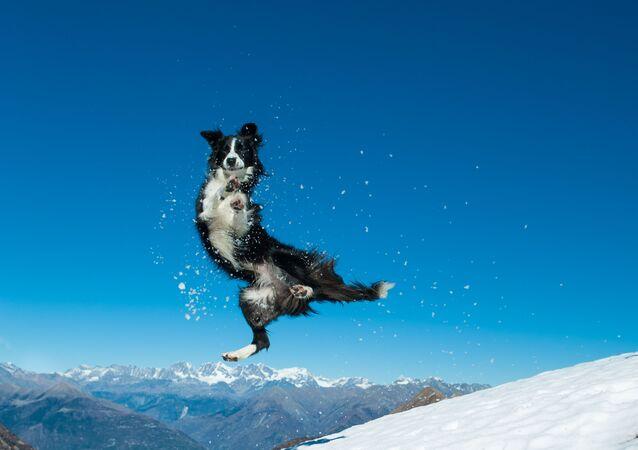 Bir köpeğin kar keyfi.