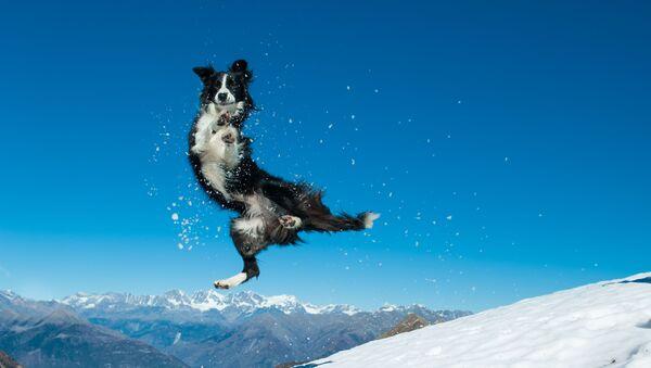 Kışın keyfini yaşayan hayvanların komik görüntüleri - Sputnik Türkiye