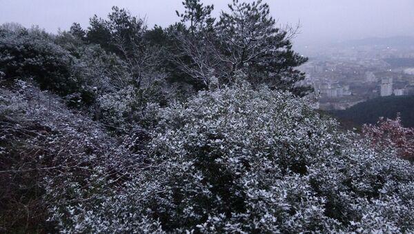 İstanbul'da kar yağdı, Aydos Ormanı beyaz örtüyle kaplandı - Sputnik Türkiye