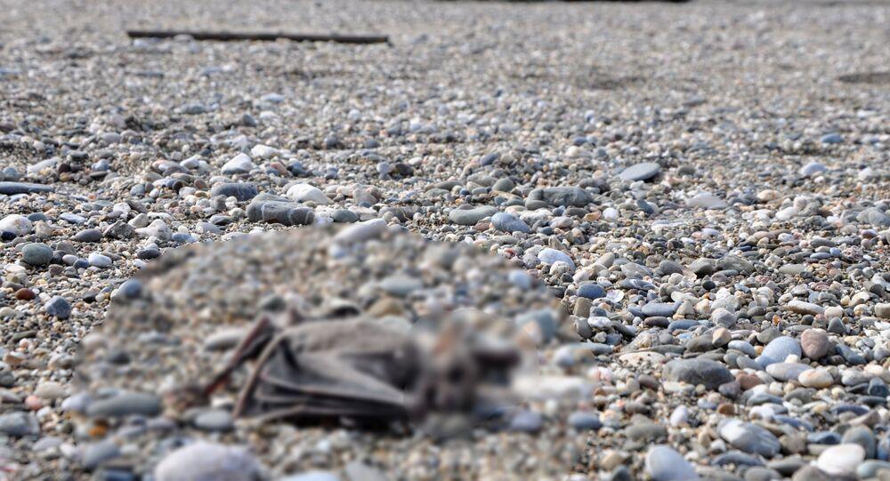 Yarasa ölüsü - Antalya