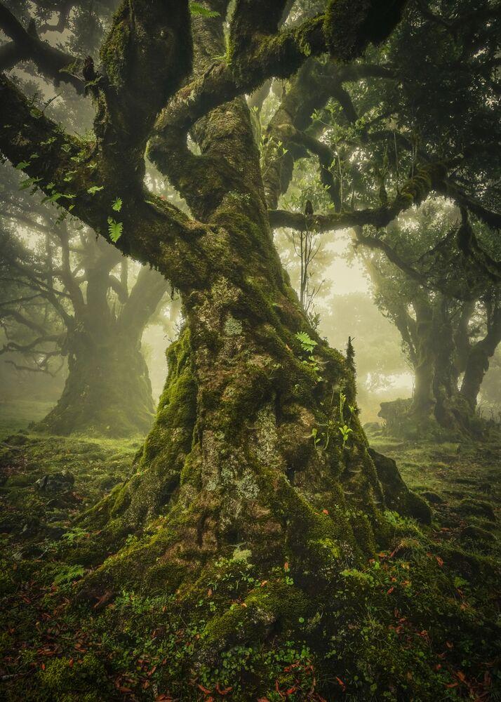 Yarışmanın Yalnız Ağaç Ödülü kategorisinde birinci seçilen Alman fotoğrafçı Anke Butawitsch'in Madeira Adası'nda çektiği fotoğraf.