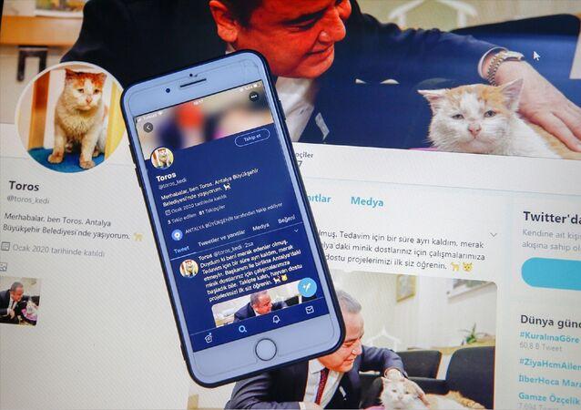 Elazığ'daki depremden yaralı kurtarılan ve bir binanın enkazının çevresinde sahiplerini ararken itfaiye ekiplerince sahiplenilen kedi adına twitter hesabı açıldı.