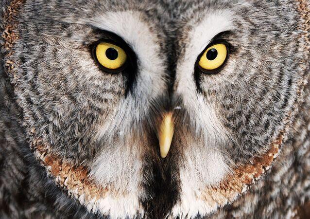 Baykuş, hayvanlar arasında en iyi gece görüşüne sahip olan canlıdır.