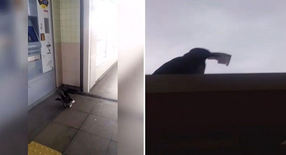 Marmaray'da para çalan karganın başka sabıkaları da varmış