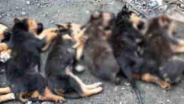 Yavru köpekleri zehirleyerek öldürmüşler - Sputnik Türkiye