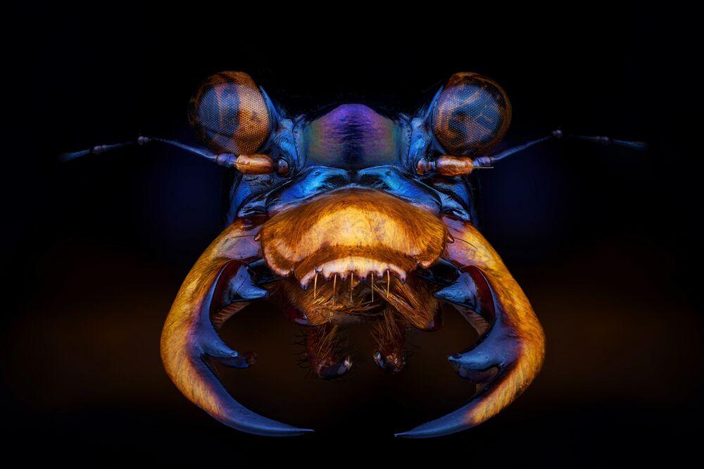 2020 Sony Dünya Fotoğrafçılık Ödülleri'nin Profesyonel Doğal Dünya & Vahşi Yaşam kategorisinde kısa listeye giren Fransız fotoğrafçı Pierre Anquet'in Tiger beetle isimi çalışması.