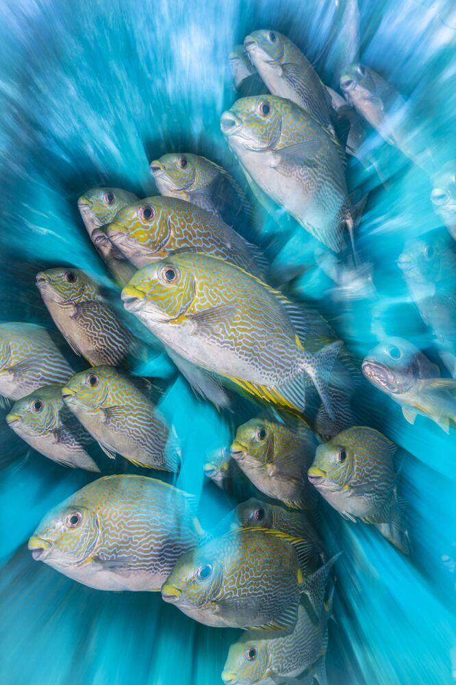 Yılın İngiliz Sualtı Fotoğrafçısı Ödülüne layık görülen Nicholas More'nin Rabbit Fish Zoom Blur çalışması.