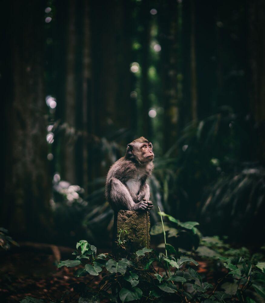2020 Sony Dünya Fotoğrafçılık Ödülleri'nde Çek Cumhuriyeti  Ulusal Ödülü'nü kazanan Jan Simon'un sevimli maymun görüntüsü.