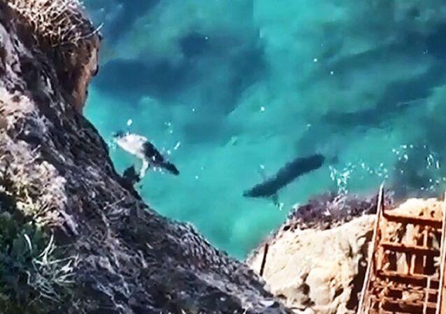 Akdeniz foklarının Antalya falezlerindeki mağaraları