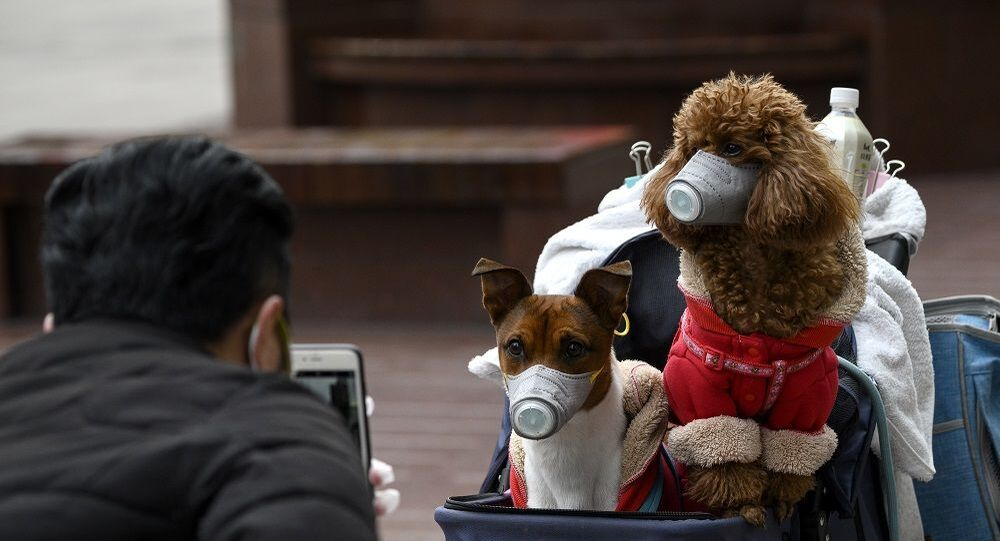 A man takes photos of dogs wearing masks in a stroller in Shanghai on February 19, 2020
