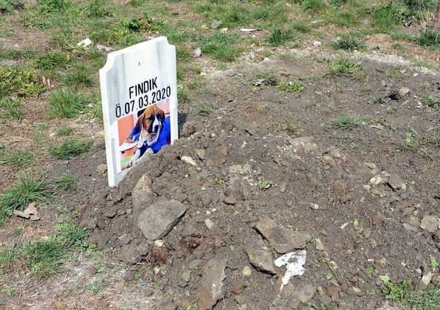 Fındık'ın gömülmesinden sonra Erkoç, Fındık'ın giydiği önlüğü mezarının üzerine koydu. Erkoç'un, gözyaşlarına hakim olamadığı görüldü.