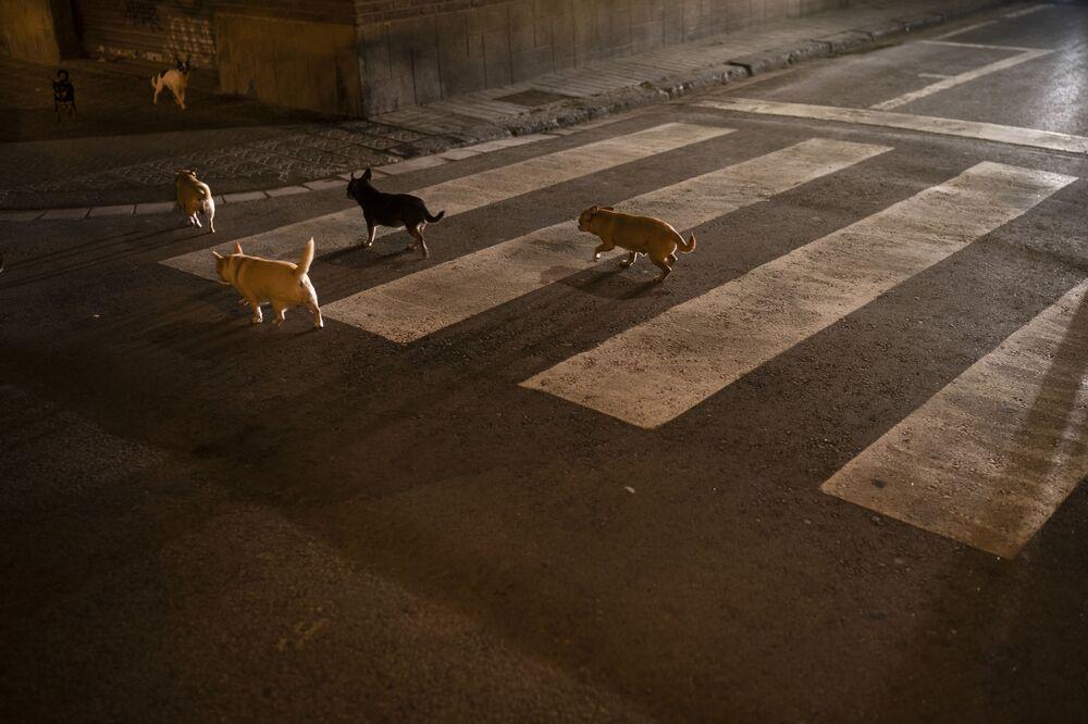 Ulusal karantina nedeniyle  sokakları boşalan İspanya'nın Barselona kentinde dolaşan köpekler.