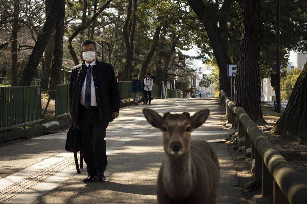 Japonya'nın Nara kentinde bir parkta görüntülenen geyik yavrusu.