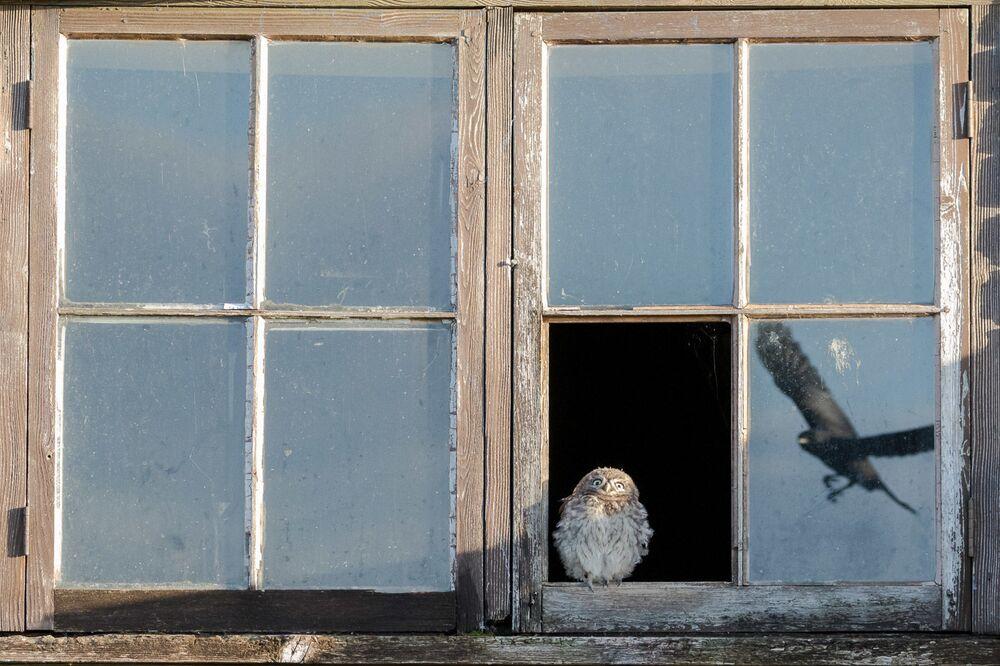 Yarışmanın Vahşi Yaşam kategorisinde ikinci seçilen fotoğrafçı Paul Holman'ın çalışması.