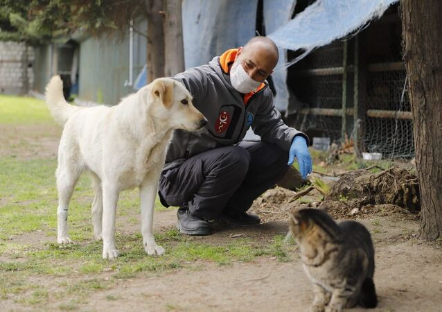 Sokak hayvanları, kedi, köpek