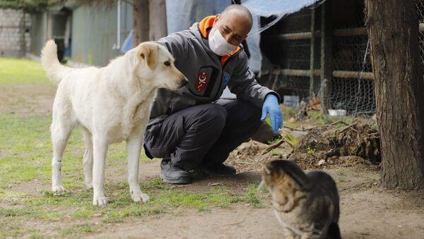 Sokak hayvanları, kedi, köpek - Sputnik Türkiye