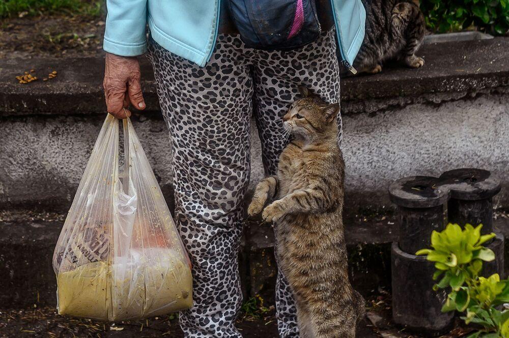 Türkiye İçişleri Bakanlığı, 81 il valiliğine gönderdiği genelgede, sokak hayvanlarına düzenli olarak mama, yem, yiyecek ve su bırakılmasını, hayvanların yaşam alanlarının dezenfekte edilmesini istedi. Fotoğrafta: İstanbul'da bir kedi beslenmeyi beklerken