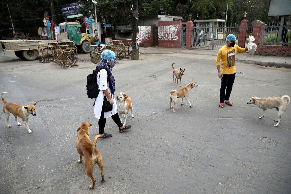 Bangladeş'in Dhaka kentinde gönüllüler sokak köpekleri için yiyecek bırakıyor.