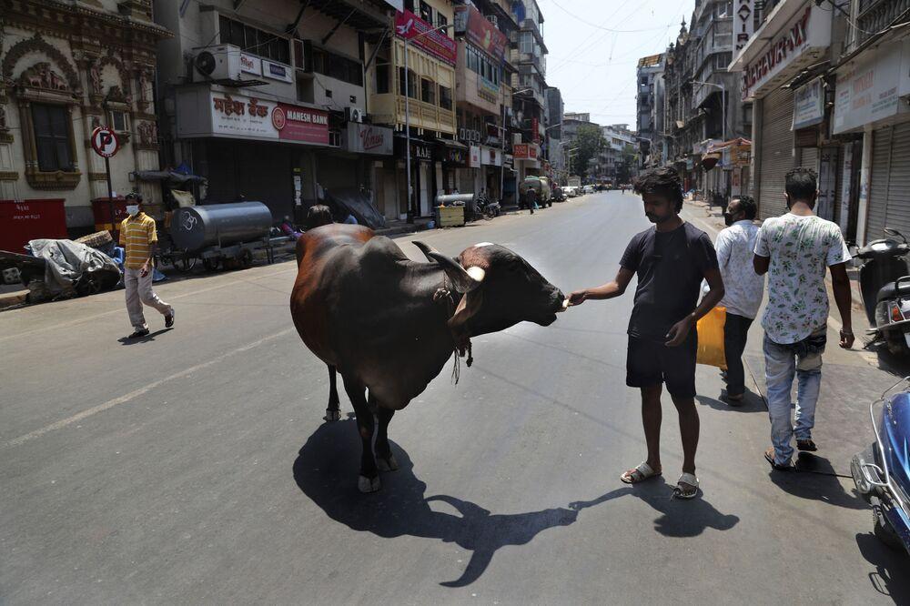 Hindistan'ın Mumbai kentinde ineği besleyen bir adam.