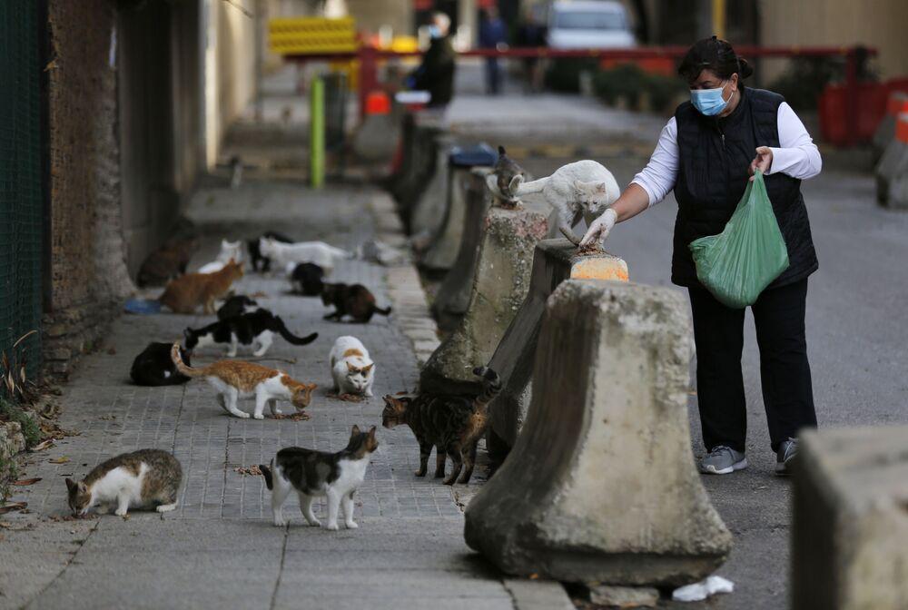 Lübnan'ın başkenti Beyrut'ta sokak kedilerini besleyen kadın.