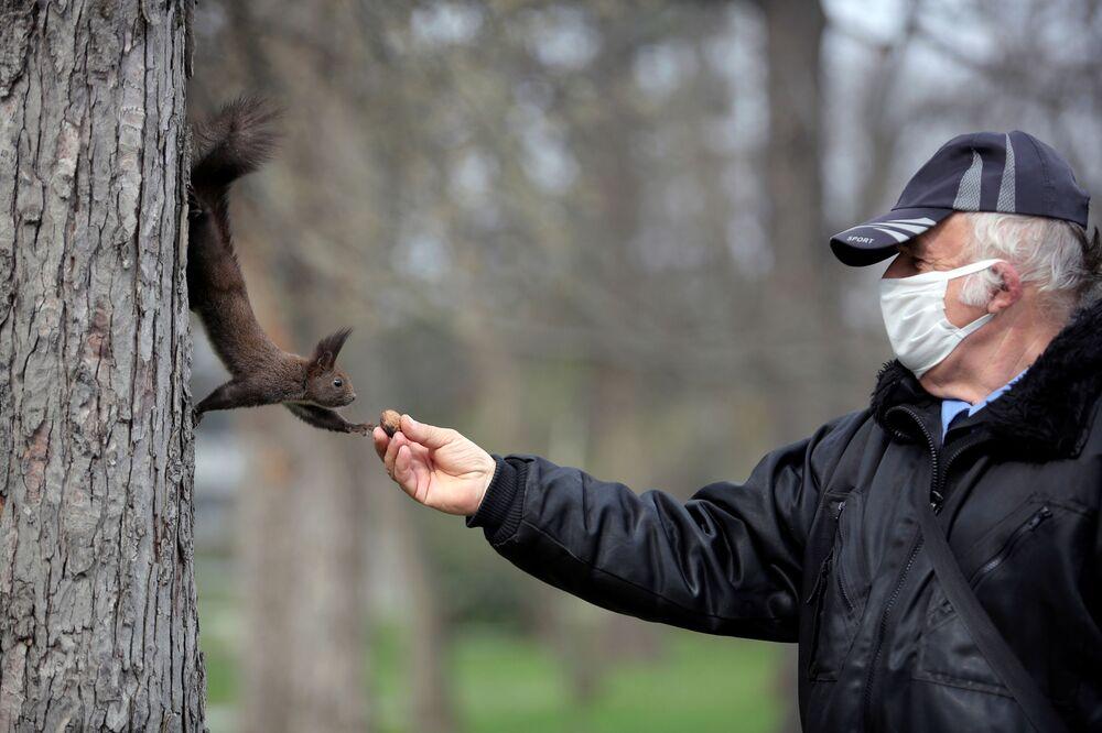 Bulgaristan'ın başkenti Sofia'da koruyucu maskeli bir güvenlik görevlisi sincabı beslerken