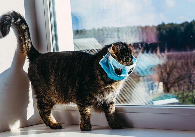 Kedi ve köpeklerle birlikte yaşayan insanların bağışıklık sistemlerinin daha güçlü olduğuna dair birçok araştırmanın olduğuna dikkat çeken uzmanlar, koronavirüs ile mücadelede güçlü bağışıklığın önemini de hatırlatıyor.