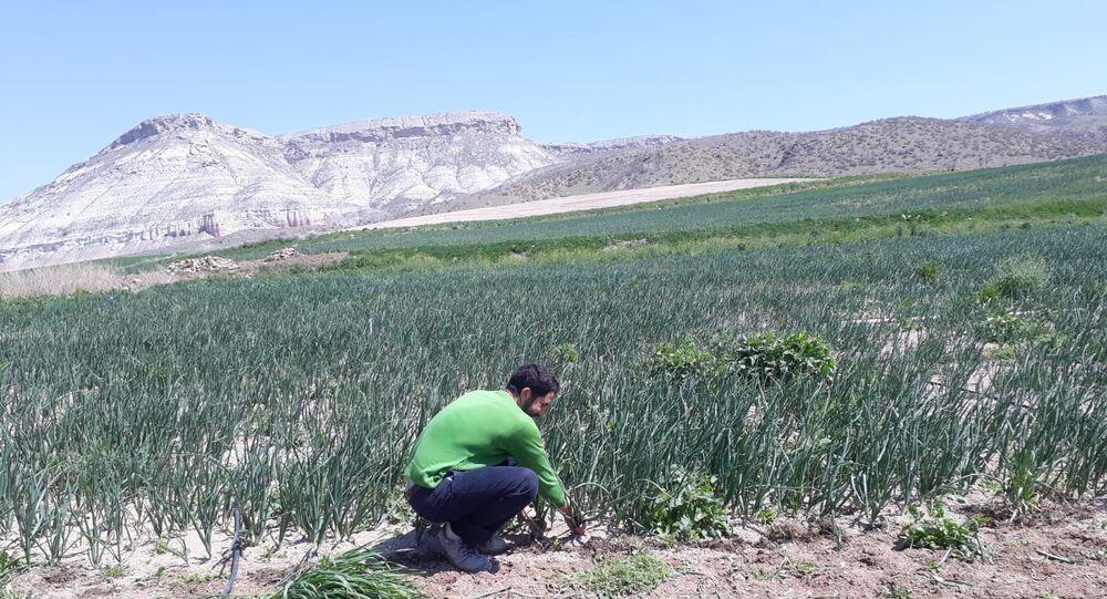 Atanamayan Türkçe Öğretmeni, mevsimlik tarım işçisi oldu: Gündüz tarla, akşam KPSS