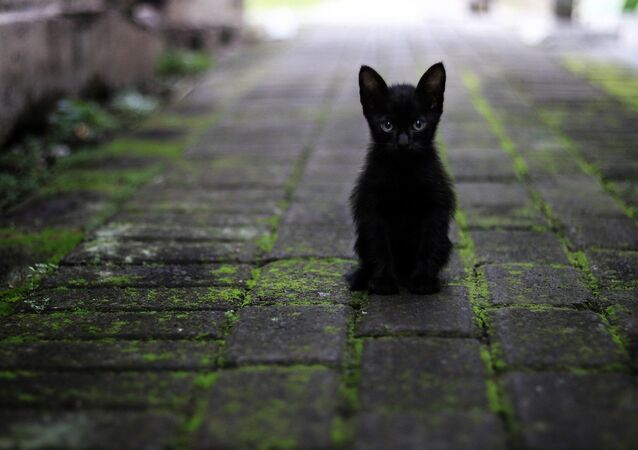 kedi-siyah kedi