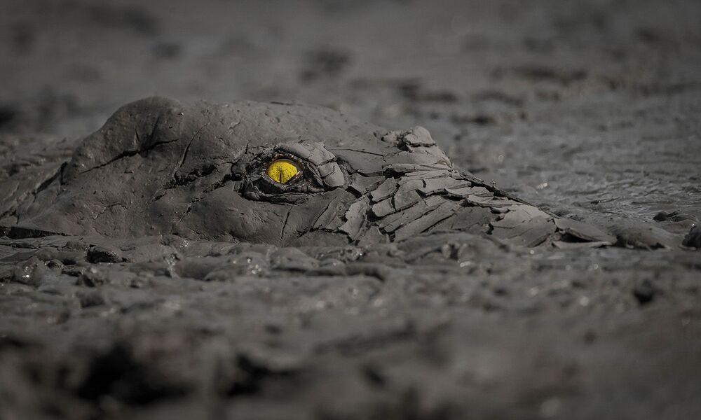 Yarışmanın Başka Hayvanlar kategorisinde birincilik kazanan fotoğrafçı Jens Cullmann'ın çektiği timsah görüntüsü