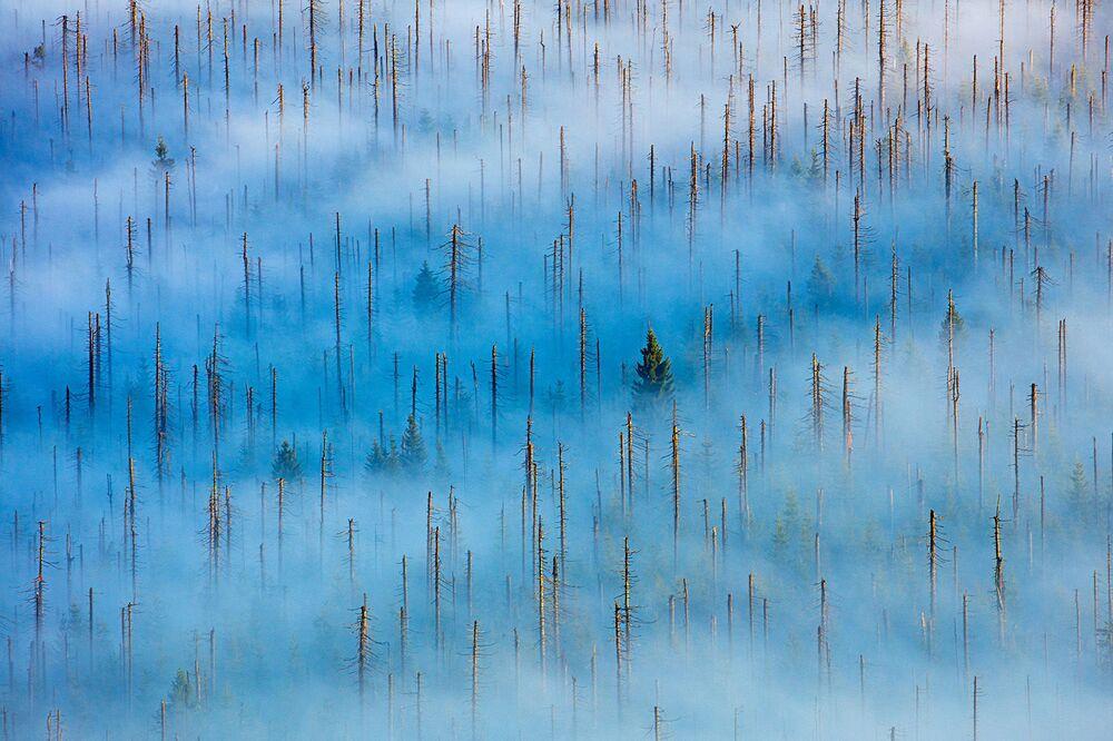 Yarışmanın Bitkiler ve Mantarlar kategorisinde birincilik kazanan Radomir Jakubowski'nin 'Ölü Orman'daki Yeni Hayat' isimli çalışması