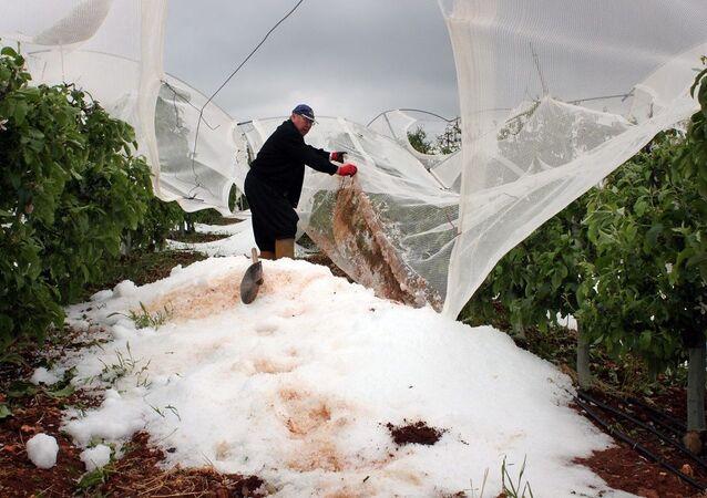 Mersin'de 2 gündür yağan dolu tarlalarda yüzde 100'e varan zarara neden oldu