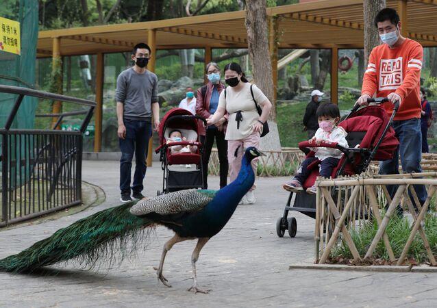 Koronavirüsün çıkış yeri olduğu sanılan Çin'in Vuhan kentinde hayatın normale dönmesiyle hayvanat bahçesi açıldı.