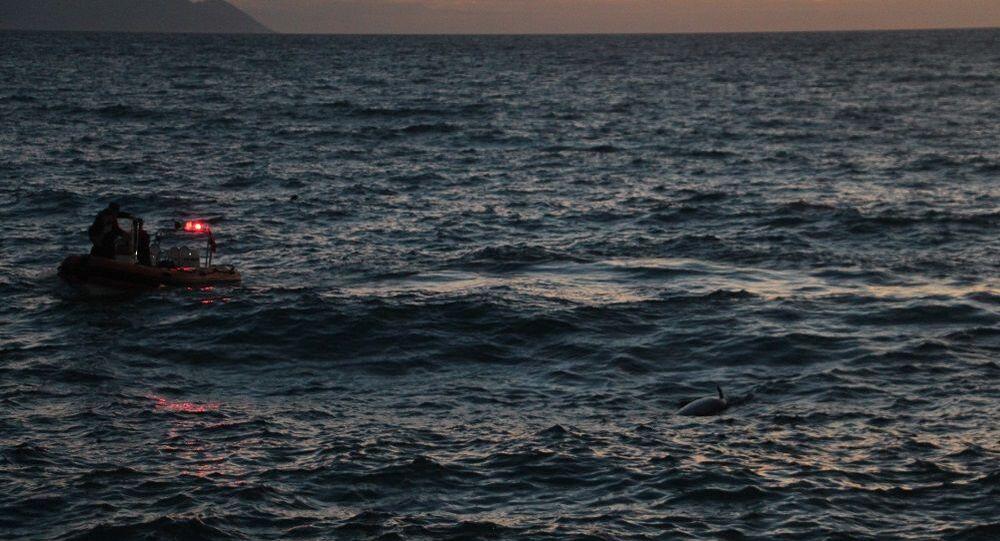 Kuşadası'nda ölü yunus balığı karaya vurdu