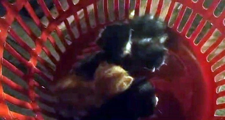 Sakarya'nın Serdivan ilçesinde çatıda mahsur kalan 4 yavru kedi itfaiye ekiplerince kurtarılırken, anne kedi yavruları kurtarılana kadar bekledi.