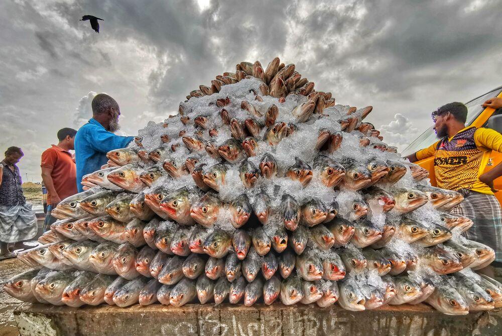 Yarışmanın Telefonla Çekilmiş Fotoğraf kategorisinde birinci seçilen Bangladeşli fotoğrafçı Azim Khan Ronnie'nin çalışması