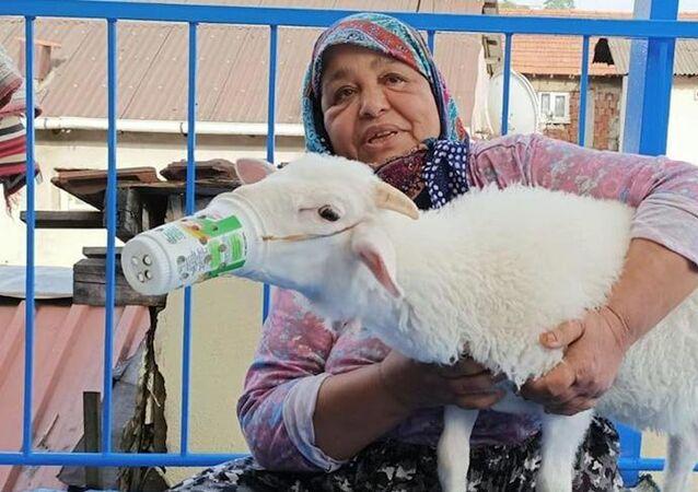 'Torunum' diye sevdiği kuzusunu koronavirüsten korumak için ayran kutusundan maske yaptı