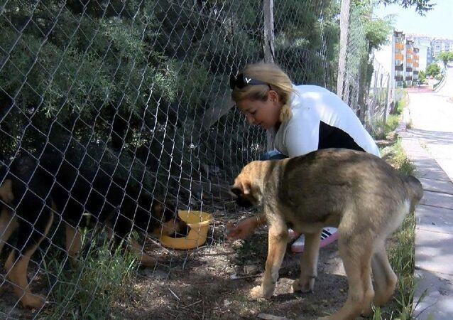 Sokak köpeklerini besleyen hayvansever Buket Özgünlü'ye patates, soğanla saldırdılar