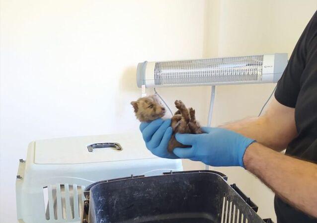 Bingöl kırsalında bitkin halde bulunan 2 yavru kurt koruma altınaalındı.