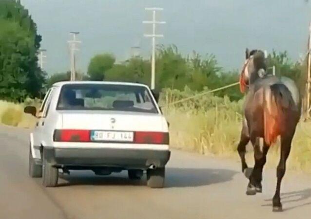Osmaniye'de otomobilde seyir halinde olan 2 kişi otomobile bağladıkları atı asfalt yolda dakikalarca koşturdu.