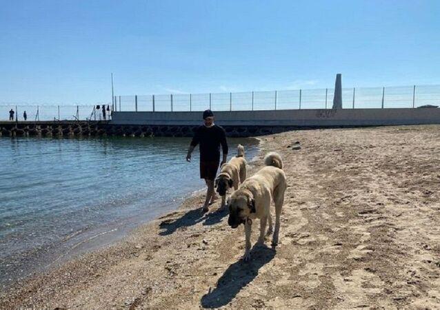 Kadıköy'de çoban köpekleri sahil keyfi yaptı