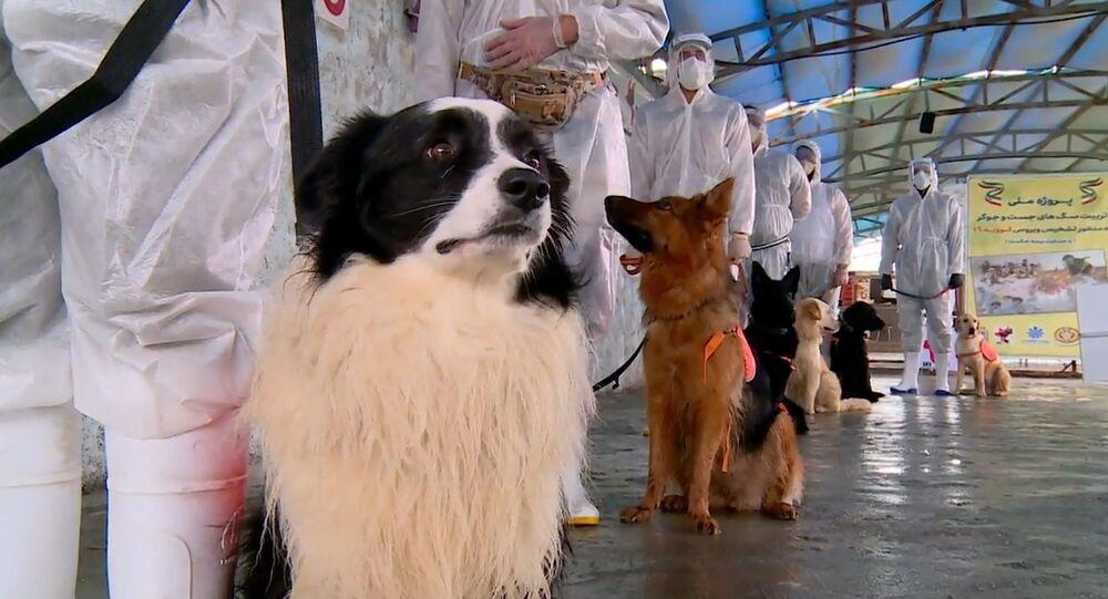 İran'da köpekler koronavirüs taşıyan hastaları tespit etmek için eğitiliyor