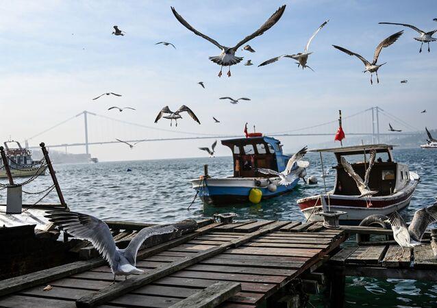 İstanbul - Boğaz - Martı - tekne - köprü