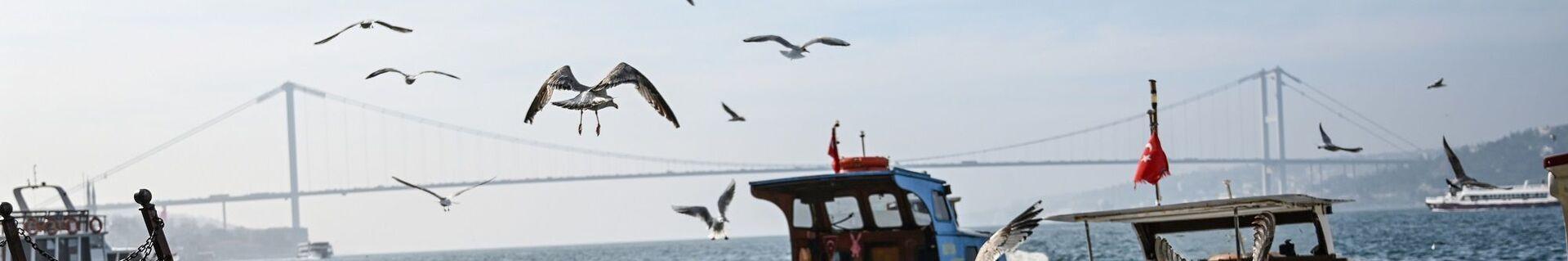 İstanbul - Boğaz - Martı - tekne - köprü - Sputnik Türkiye, 1920