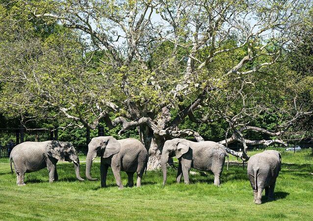 Fil - safari park