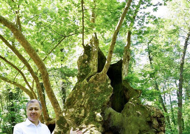 İstanbul Valisi Ali Yerlikaya, Dünya Çevre Günü'nde, Cerrahpaşa Üniversitesi Orman Fakültesi yerleşkesinde yer alan 1377 yaşındaki çınar ağacını ziyaret etti.