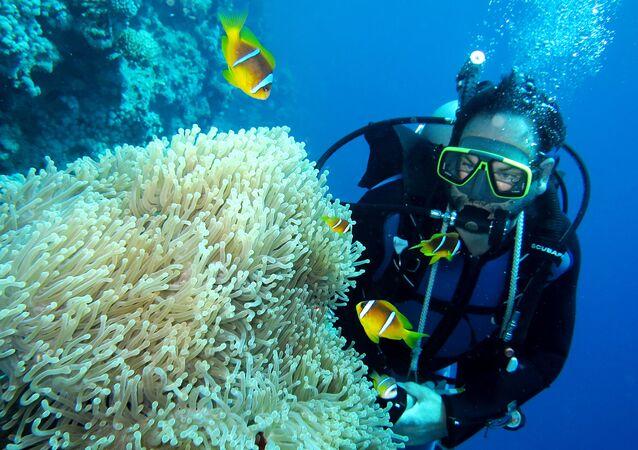 Okyanus canlılarını izleyen dalgıç